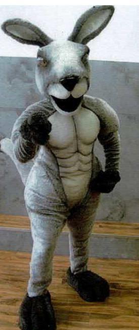 Mascots & Character Suits 9